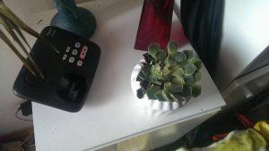 Pflanze mit Strahlungsschäden