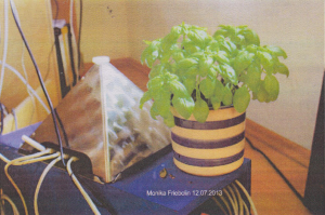Pflanze mit Pyramide als WLAN-Strahlenschutz