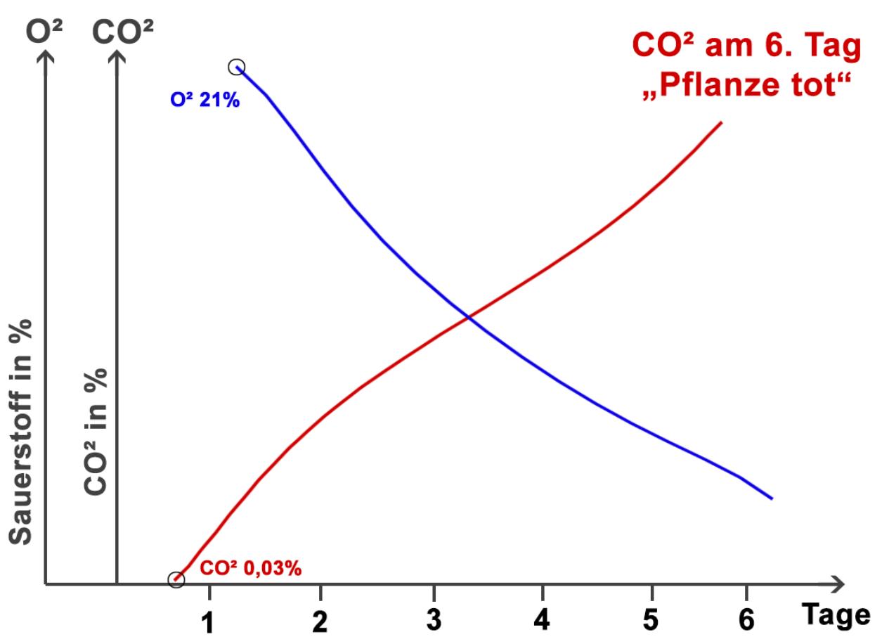 Pflanze CO2 O2