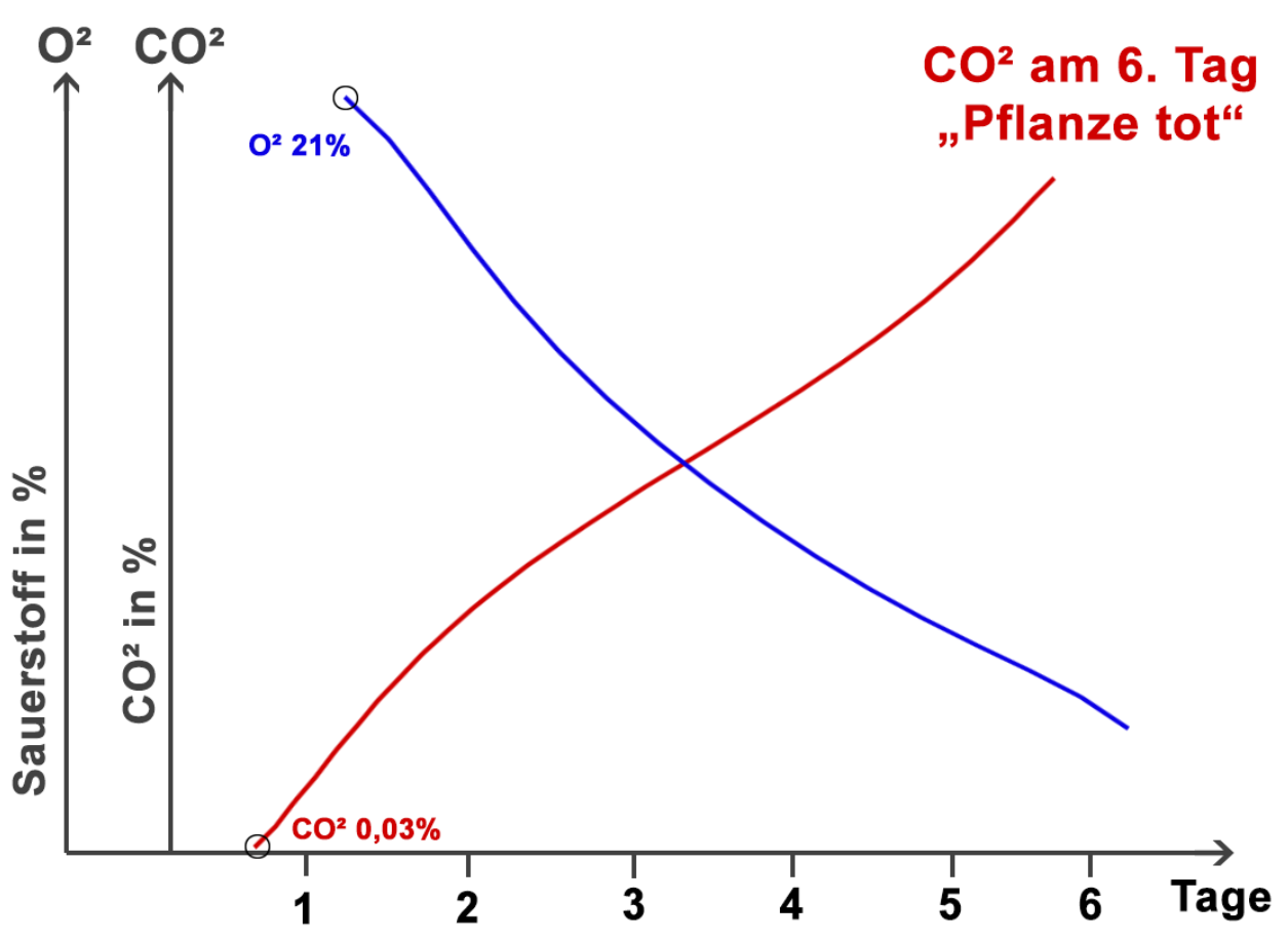 Pflanze CO2 O2